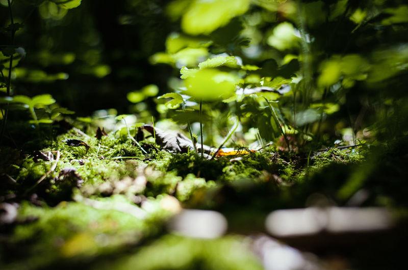Moss growing on rock