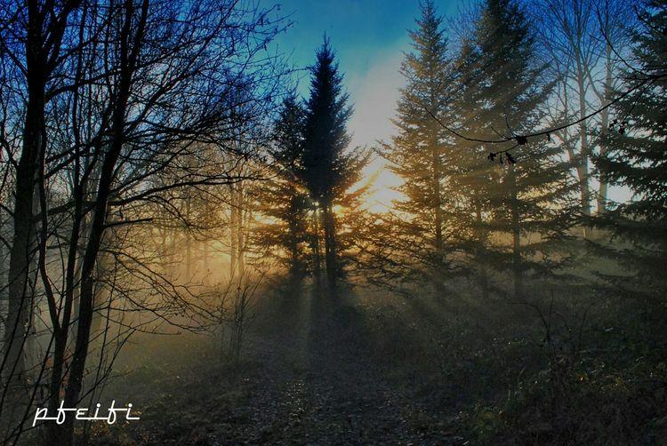 Selten so ein schönes Licht gehabt, ich bin froh das ich das Fotografieren konnte! Forest Check This Out Nature_collection Harz