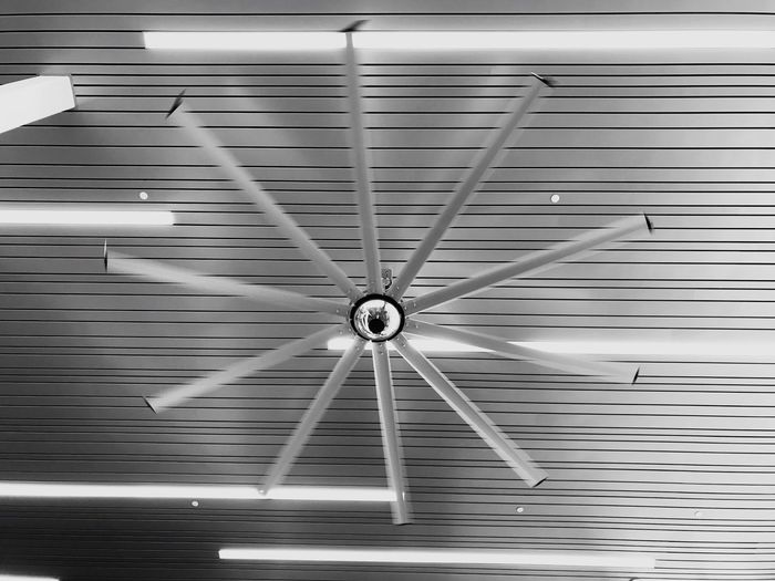 Ceiling Ceiling Fan Hanging Illuminated Indoors