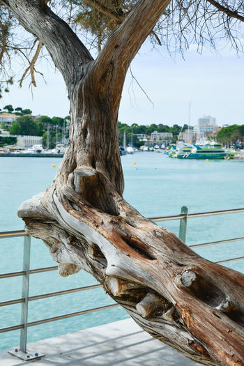 Tree trunk by sea against sky