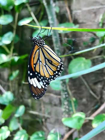Butterfly Animal Themes Animal Wildlife Invertebrate Insect Animal Animals In The Wild One Animal Close-up Focus On Foreground Animal Wing Butterfly - Insect Beauty In Nature No People Nature Day Animal Markings Plant Outdoors Fragility Animal Body Part