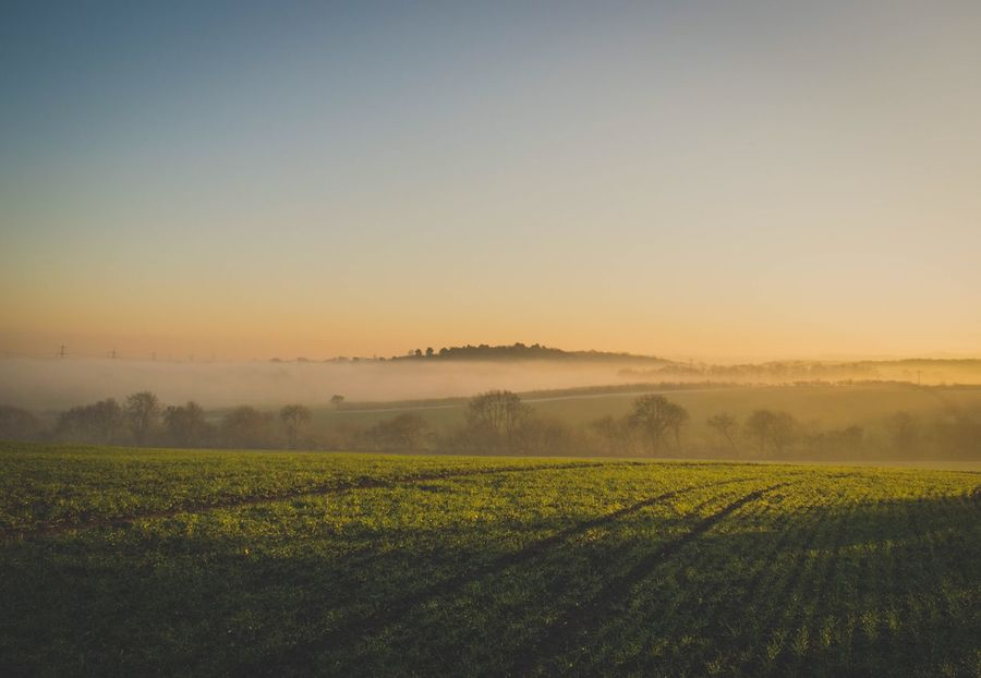 Field Rural Scene Landscape Nature Eyem Nature Lovers  Agriculture Tranquil Scene Beauty In Nature Tranquility Farm No People Outdoors Idyllic Sky Day Fog Landscape_photography Hazy  Tranquility Beauty In Nature Field Foggy Depth Of Field Countryside EyeEm Best Shots