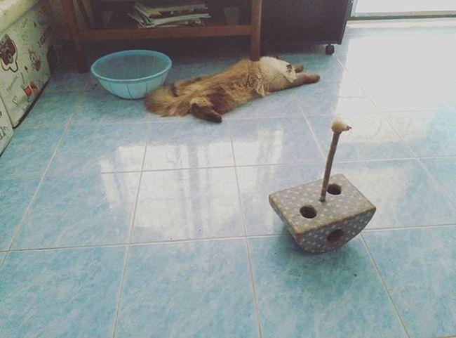 Sarsi catบ้านแมวหนวด แมว Cats Smile Joke Funny Cute Pretty Phuket Thailand Nek