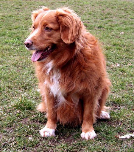 Annie Dog Nsdtr