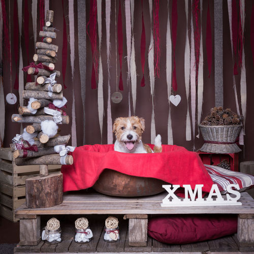 Portrait of dog sitting on container by christmas decorations on table