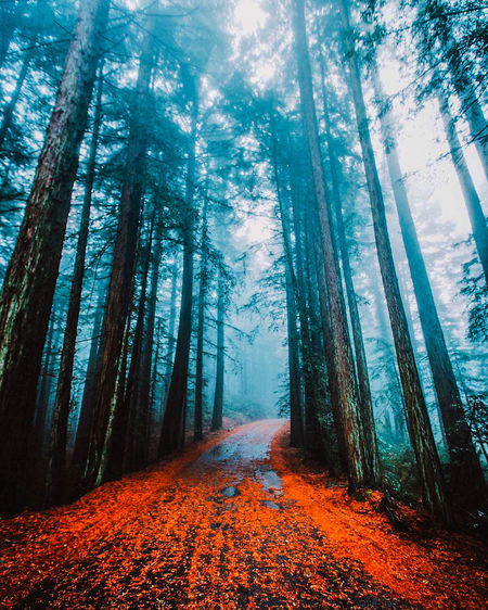 🙌 Forest Tree Nature The Way Forward Outdoors Beauty In Nature Tree Trunk Road Taking Photos EyeEm Best Edits Looking At Camera Like4like Nature Photography Photographer Photography Instagood Instamood Instalike Instapic Justgoshoot Winding Road Road Capture The Moment 2k17 First Eyeem Photo