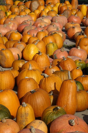 Abundance Autumn Close-up Day Food Food And Drink For Sale Freshness Gourd Halloween Healthy Eating Nature No People Orange Color Outdoors Pumpkin Squash - Vegetable Vegetable