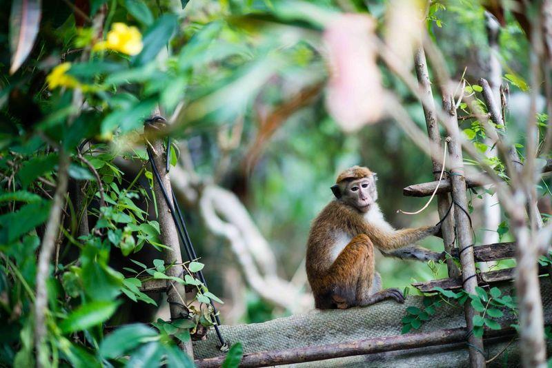 Sri Lanka SriLanka Monkey Nature Kandy Travel Traveling Animal Bokeh Nature Photography ColorPalette