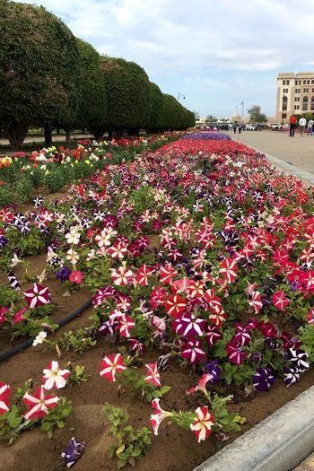 Blumen Oman