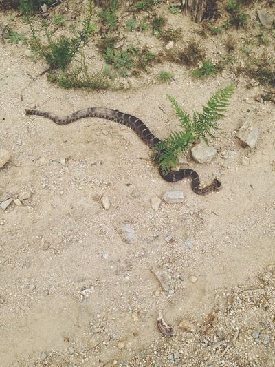 Snakes Nature Walks Hiking Trail Yikes!