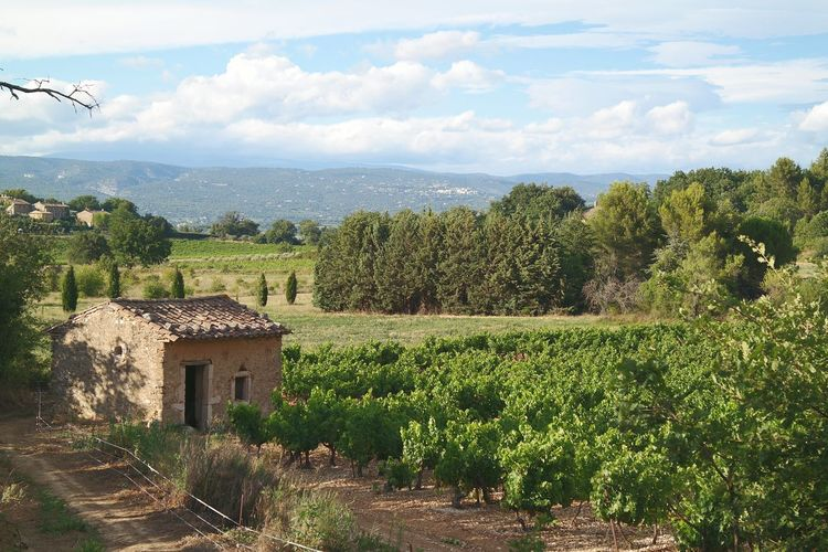 Nature Luberon Pierre France Vignes Cabanon Sunlight