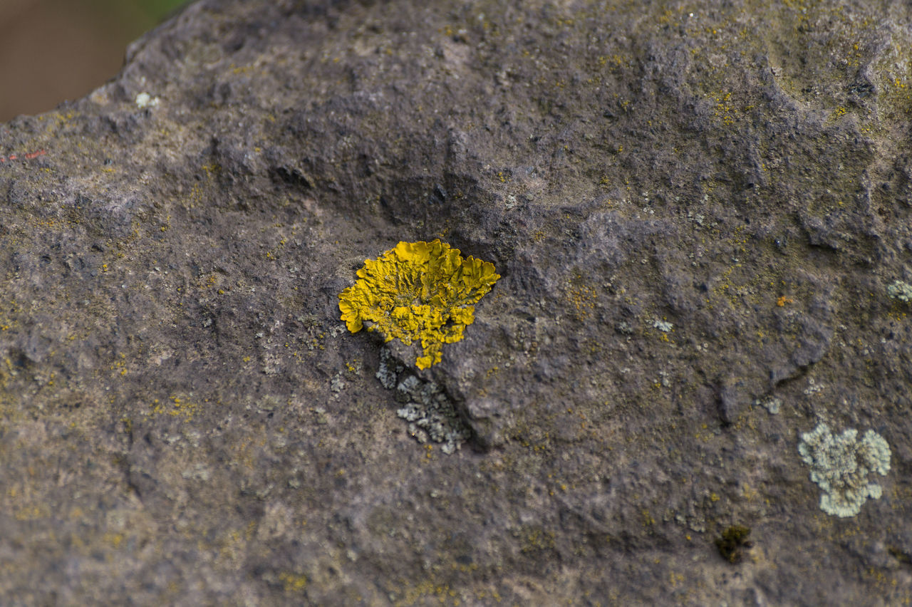 rough, yellow, no people, textured, close-up, outdoors, day, nature