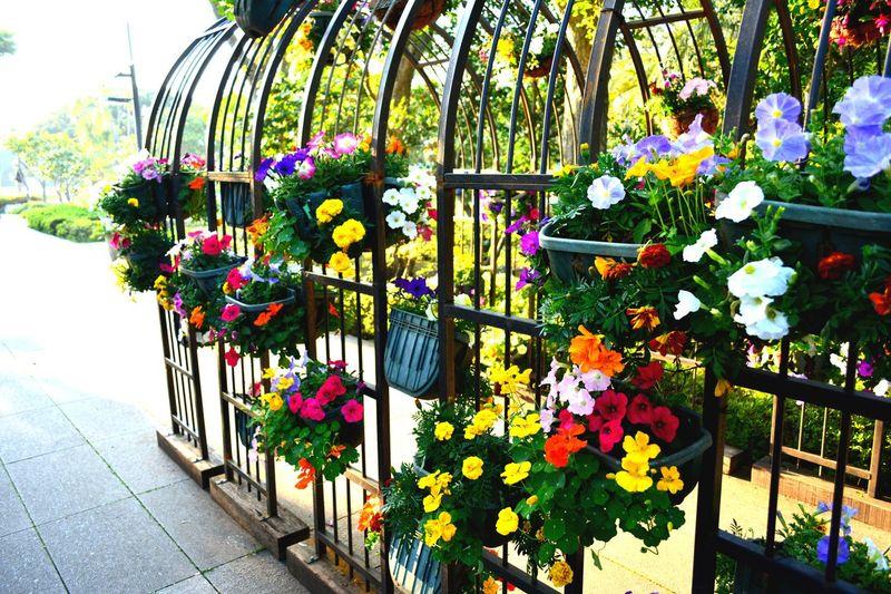 flower garden Flower Sky Japan Hello World Enjoying Life Life Life Is A Beach First Eyeem Photo