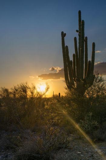 Arizona Arizona