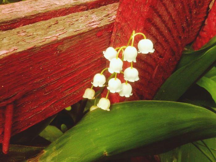 First Eyeem Photo Spring Hello World Relaxing
