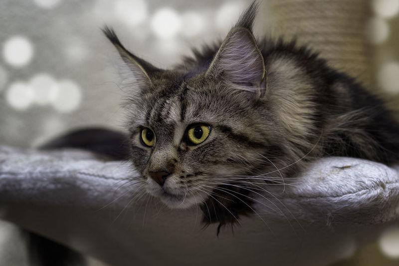 Close-up portrait of a cat