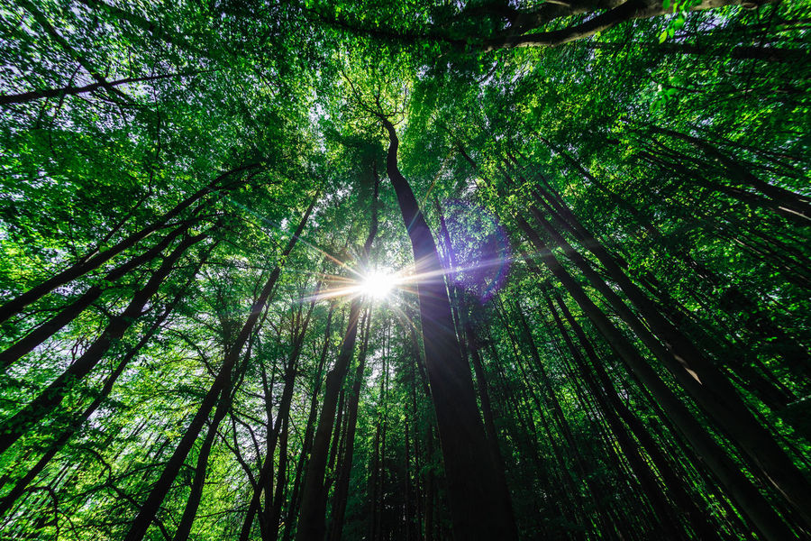 EyeEm Nature Lover Nikon D750 Nikon Fisheye16mm Beauty In Nature Bright Brightly Lit Day Forest Forestwalk Green Color Growth Land Lens Flare Low Angle View Nature Outdoors Plant Sky Streaming Sun Sunbeam Sunlight Tranquility Tree Tree Canopy  Tree Trunk Trunk WoodLand The Great Outdoors - 2018 EyeEm Awards