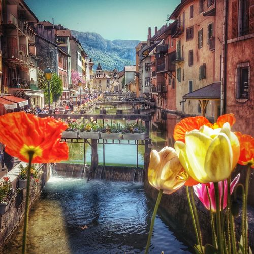 Annecy, France Annecy France Oldtown Channel The Venice Of The Alps The Great Outdoors - 2016 EyeEm Awards Flowers Town City
