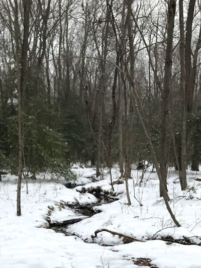 Cold Temperature Snow Winter Tree Weather Nature Tranquility Forest Beauty In Nature No People Tranquil Scene Scenics Tree Trunk Day Outdoors Bare Tree Landscape New Jersey ! Stream Taking Pictures Snow Covered Woods Beauty In Nature Snow Covered Cold Day In March Nature