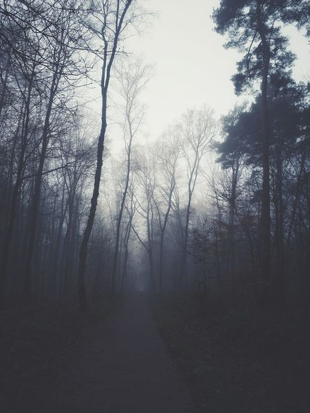 Allein im Wald 🐾😊 Tree Fog Forest Branch Nature Bare Tree Tree Trunk Spooky Outdoors Beauty In Nature No People Day Sky Freshness The Way Forward Landscape Tadaa Community EyeEm Gallery Exceptional Photographs Foggy Morning Hugging A Tree Outdoor Photography Waldspaziergang Grey Day Cold Temerature
