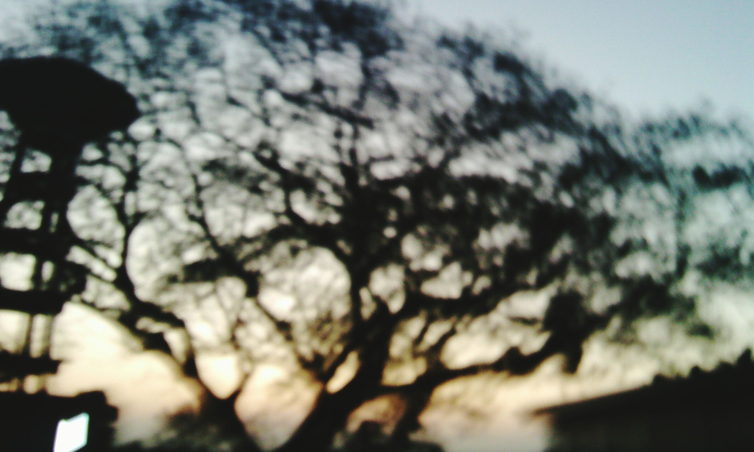tree, silhouette, low angle view, sky, branch, focus on foreground, selective focus, nature, growth, close-up, outdoors, beauty in nature, dusk, tranquility, no people, day, sunlight, bare tree, sunset, scenics