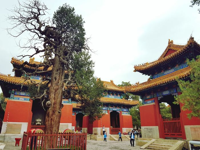 Beijing China. China Photos China In My Eyes Lama Temple Temples Tree Traveling Travel Photography Tourism