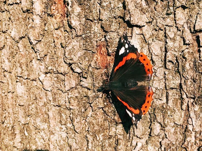 Full frame shot of tree trunk with butterfly