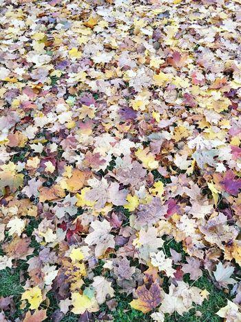 Beautiful Nature Autumn Fallen Leaves