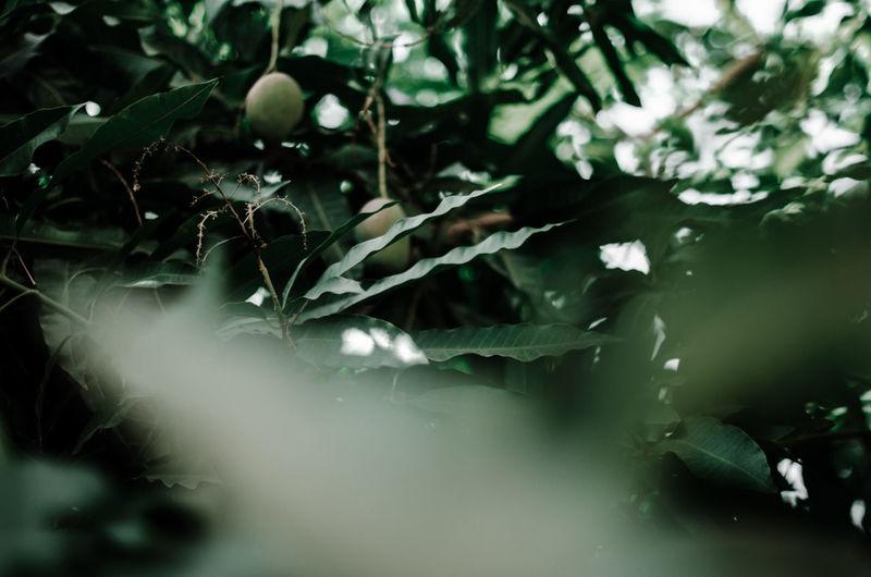 Full frame shot of fresh plants in water