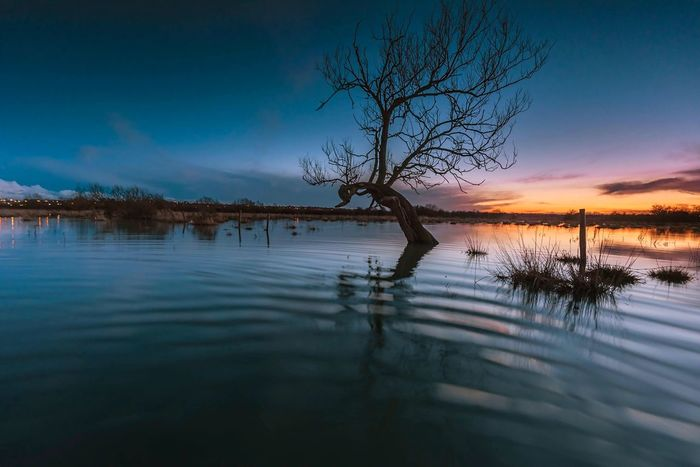 Ripples Lonely Tree Tree Flood Water Water Reflections Sunset Dusk Blues Reflections Showcase: February EyeEm Masterclass Clouds And Sky Landscape_photography Great Britain Nature EyeEm Nature Lover Ripples Ripples In The Water Beautiful Flooded Floodplain Waterscape Trees And Sky Landscapes With WhiteWall