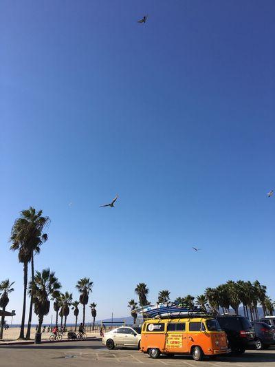 Car Blue Tree Spread Wings Clear Sky Outdoors Venice Beach Seagulls Freedom Summer Sunshine Sunny California SoCal