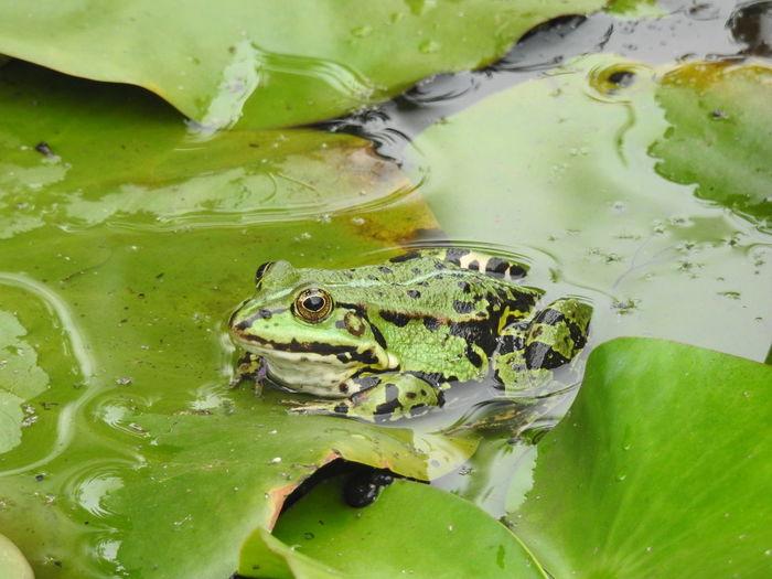 Animal Green