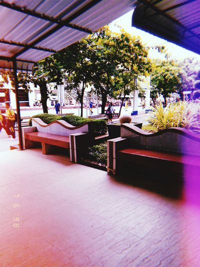 My school My School~~ Table Architecture Built Structure Flower Head Plant Life Stem Bud In Bloom