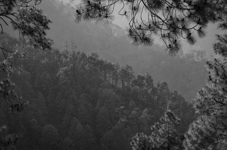 Beauty In Nature Branch Cold Temperature Day Fog Forest Freshness Growth Hazy  Landscape Low Angle View Mist Mountain Nature No People Outdoors Plant Scenics Sky Tranquil Scene Tranquility Tree Winter