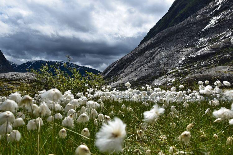 White flowers on landscape against sky