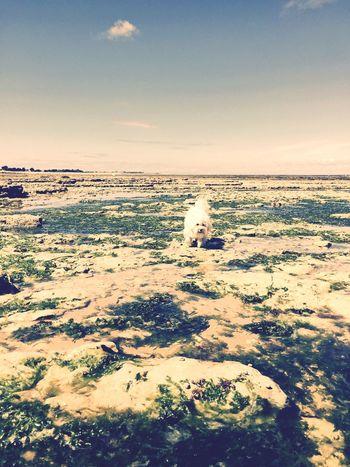 Ilovemydog Ile D'Oleron Isis😍 Relaxing Time Holidays ☀