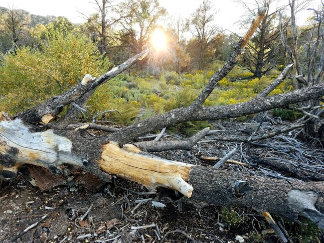Outdoors Camping Hiking Mt Charleston Nevada Sunset Dusk Trees And Sky Fall Colors Nature