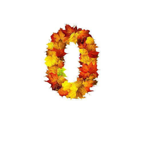 Close-up of orange leaf against white background
