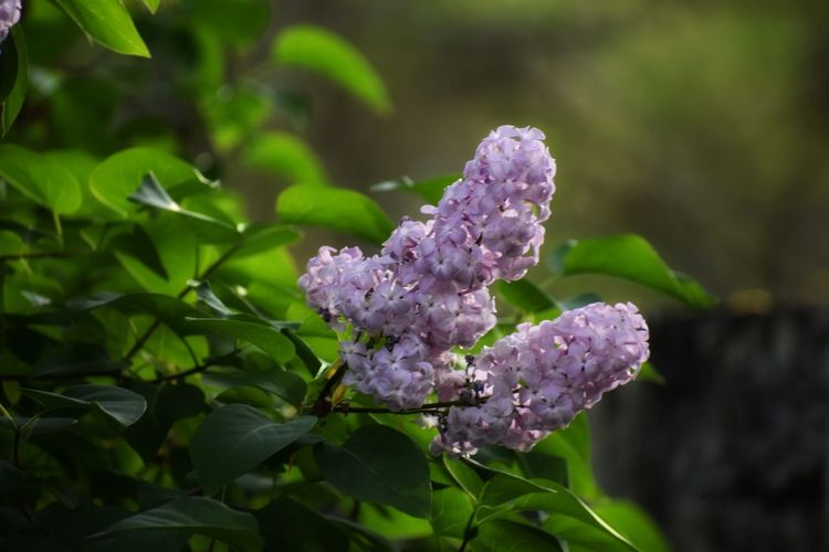 Ineffable Life Photography And Art Flower Head Flower Plant Part Closing Nature Reserve Leaf Rural Scene Purple Scented Botany