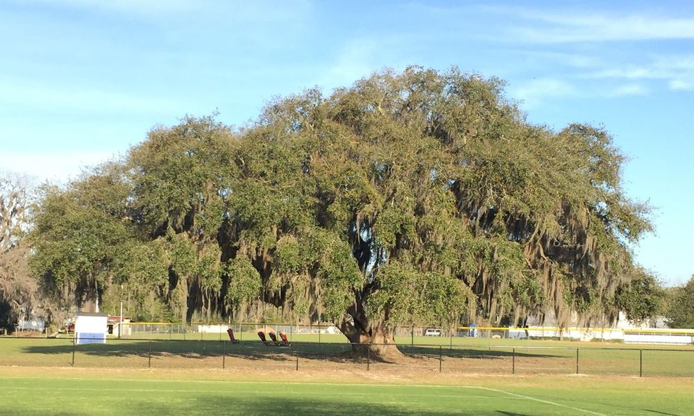 Tree Growth Green Color Grass Sky Nature Landscape Outdoors Day Beauty In Nature Tranquility Scenics Tranquil Scene No People Golf Course Golf Campo De Futbol Roble God's Beauty Oak Tree Quercus