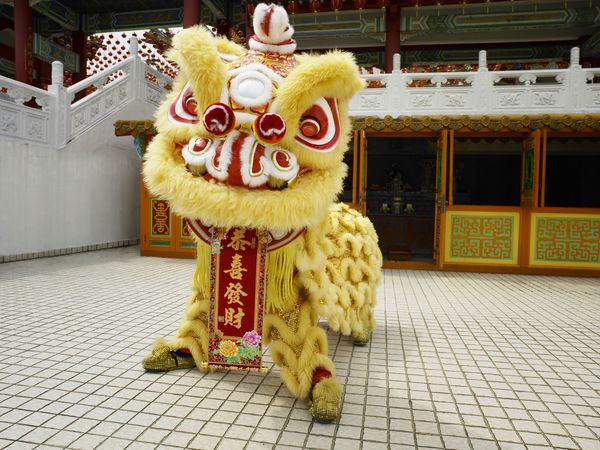 yellow lion dance at temple Celebration Gong Xi Fa Cai Good Luck Lion Dancers Lion Dance Performance Prosperity Traditional Culture Banner Chinese Lion Chinese New Year Costume Cultures Festive Lion Dance Opening Event Performance Religious  Special Occasion Temple - Building