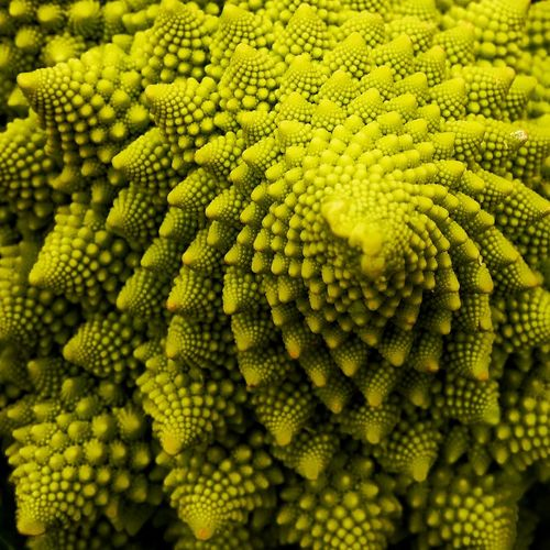 Full frame shot of romanesco broccoli