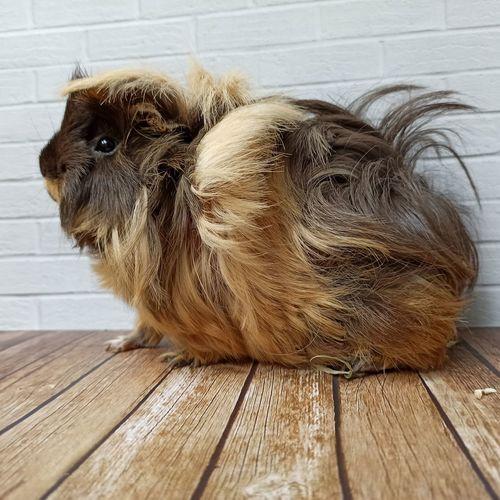 Portrait of a dog on hardwood floor