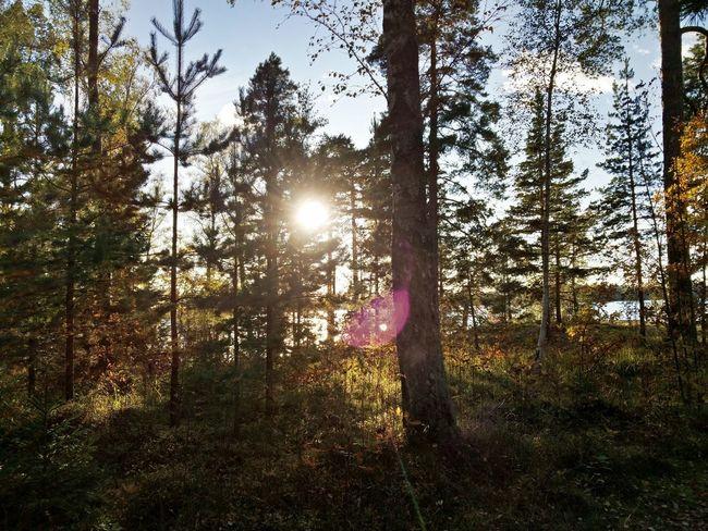 Finland Forest Nature Sunlight Nofilter
