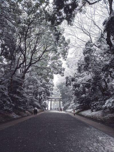 Snowing in Meiji-Jingu shrine, a wonderful walk! Meditation Tranquility Tranquil Scene Meiji-Jingu Shrine Japan Japan Photography Winter Snowing Trees Forest Temple Forest Photography Tree Nature Transportation Road The Way Forward Day Outdoors Beauty In Nature Sky Branch Snow