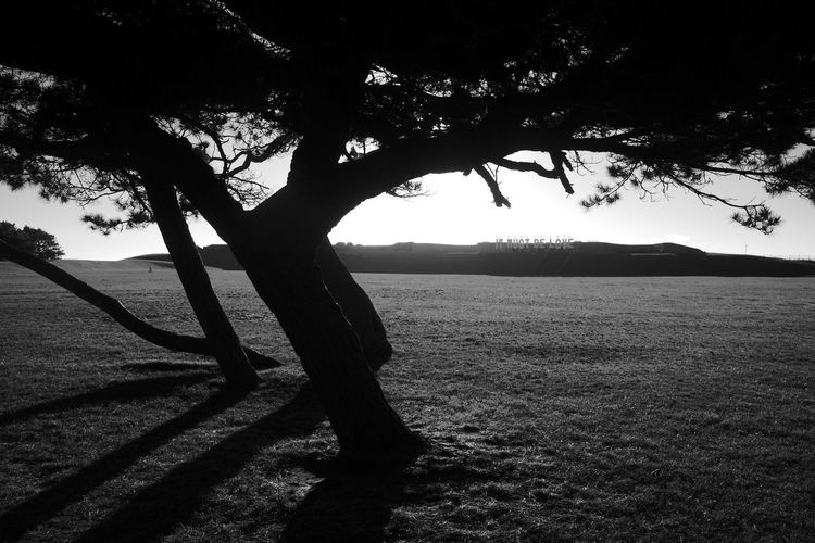 It Must Be Love Black & White Beauty In Nature Blackandwhite Branch Field Grass Growth It Must Be Love Landscape Nature Outdoors Scenics Silhouette Sunlight Tranquil Scene Tranquility Tree