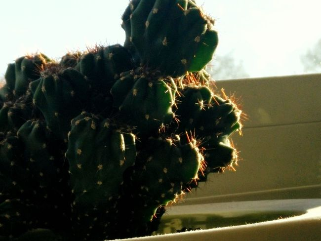 Cactus Shadow Shadowplay Light And Shadow Light And Dark Kotlife My Student Life Plant Plants Cacti Morning Picture Phoneography One Plus One Sunset Sunlight Close-up Close Up Closeup Nature