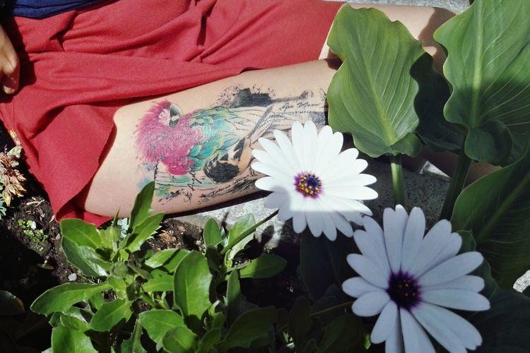 Guacamaya 💚 Tattoo Tatooedgirl Leg Petal Close-up Plant Blooming Daisy Single Flower