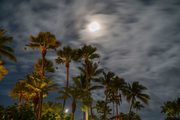 Palm Tree Tree Cloud - Sky Sky No People Nature Moon Outdoors Beauty In Nature Night Treetop Night Photography Long Exposure In The Night Full Moon Sony A6300 Travel USA Grand Hyatt Kauai EyeEmNewHere Vacations Blurred Background Illuminated Nightphotography Moon Light The Great Outdoors - 2017 EyeEm Awards EyeEm Selects Breathing Space