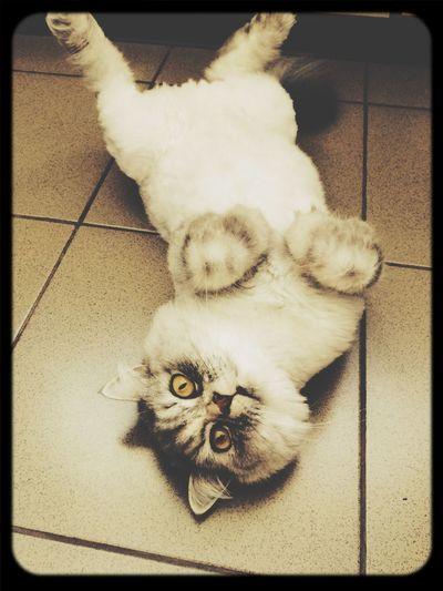Моя котейка ^.^